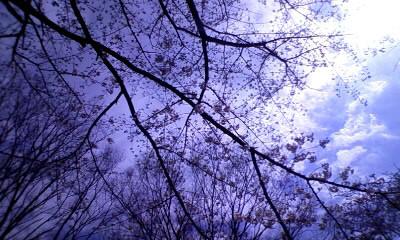 「仕事の話があまり出ないブログ」 株式会社ワックスミュージックエンターテイメント 社長のブログ-09.03.28a